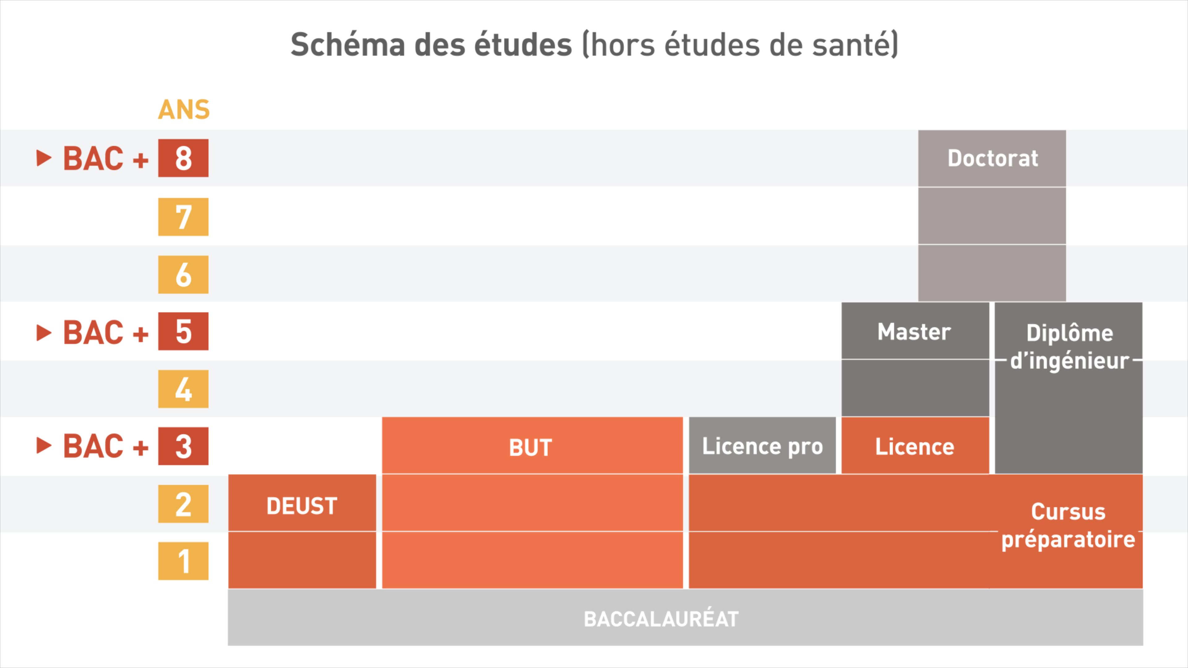 Schéma des études (hors parcours santé)